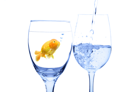 A conceptual shot of a goldfish in a glass water looking at water being poured into another glass photo