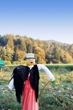 A shot of a scarecrow at the pumpkins farm photo