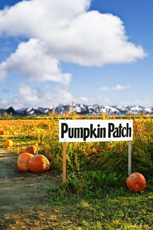 A shot of pumpkin patch sign on a pumpkins farm photo