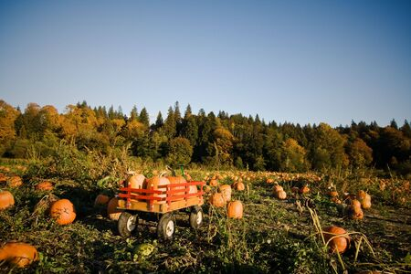 wheeled: A shot of a wheeled wagon carrying pumpkins during harvest time Stock Photo