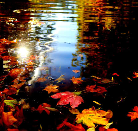 autum: Colourful autum leaves swimming on dark water with some reflections of the blue sky Stock Photo