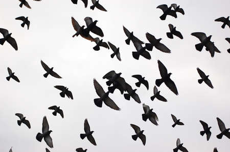 Silhouettes of flying birds in black and white
