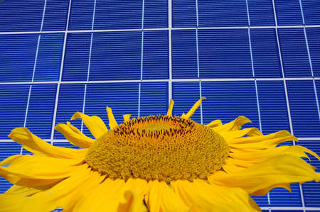 Sunflower in front of a blue solar panel