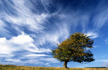 blowing wind: Lonely tree on top of a hill with strong wind blowing Stock Photo