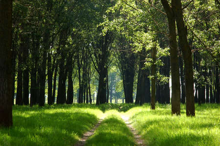 alluvial: Sunshine in an alluvial forest with green grass Stock Photo