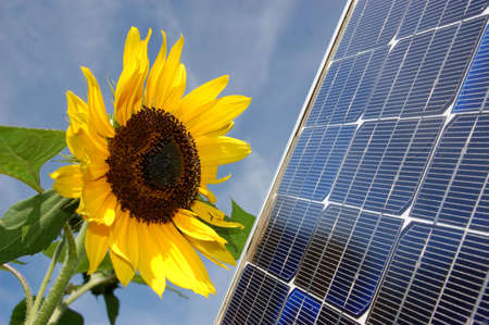 Sunflower and a solar energy panel photo