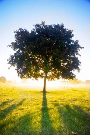 Lonley tree in bright sunshine photo