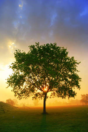 Lonely tree during a misty morning sunrise Stock Photo - 4675305