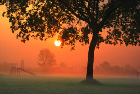 Silhouette of a tree at a morning sunrise Stock Photo - 4675302