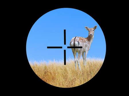 gunsight: View of a deer through a telescopic sight Stock Photo
