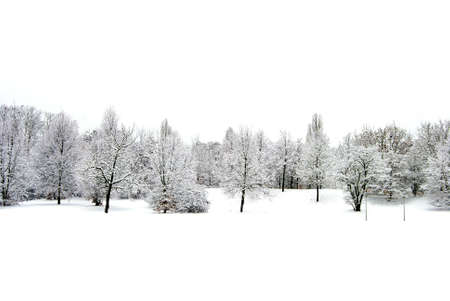 Winter landscape with snow loaden trees and white sky