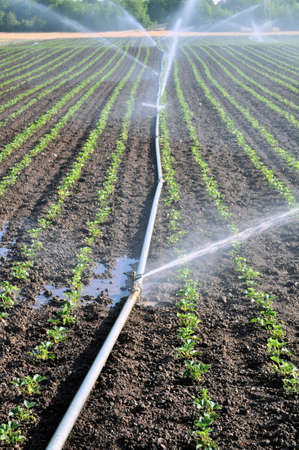 irrigation equipment: Water springler on an agriculture field Stock Photo