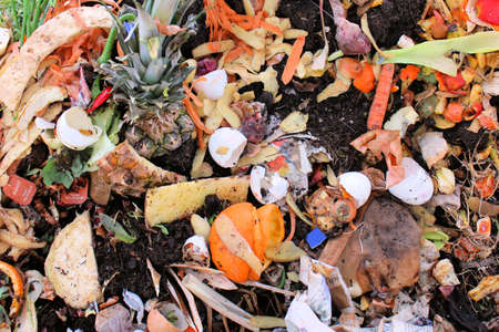 Śmieciarka: Warzywa i jajka na schronisko kompostu