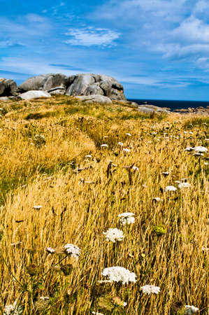 bretagne: Typical Bretagne landscape with grass, flowers, rocks and sea Stock Photo