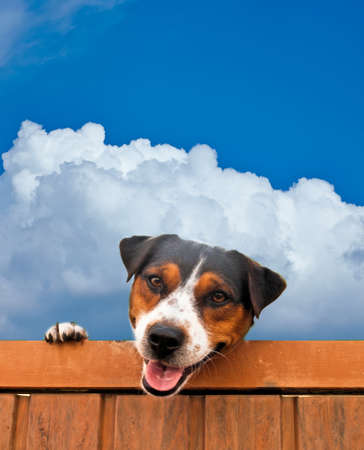 Young dog looking over a fence