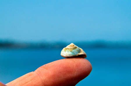 finger tip: Sea shell on a finger tip with the ocean in the background