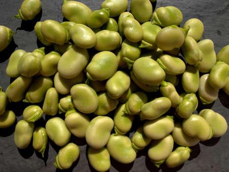 Freshly harvested broad beans  Reina Mora  against a grey slate background, England, UK, Western Europe  Stock Photo - 13239223
