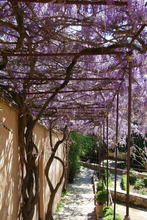 passageways: Wisteria covered passageway in the upper gardens of the Generalife, Palace of Alhambra, Granada, Granada Province, Andalucia, Spain, Western Europe