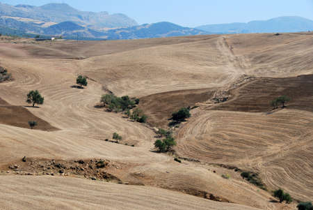 med: Wheat fields with mountains to the rear, Near Almogia, Costa del Sol, Malaga Province, Andalucia, Spain, Western Europe  Stock Photo