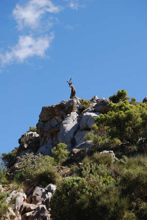 Goat statue on top of a mountain, Refugio de Juanar, Near Marbella, Costa del Sol, Malaga Province, Andalucia, Spain, Western Europe Stock Photo - 13288346