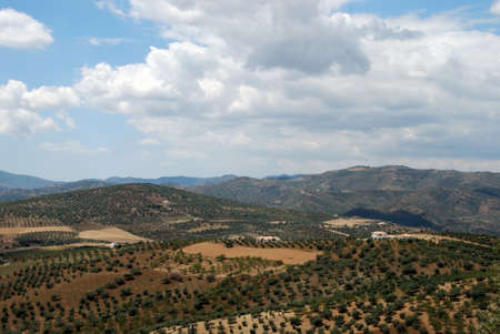 Olive groves and mountains, between Rio Gordo and Periana, Axarquia region, Malaga Province, Andalucia, Spain, Western Europe  photo