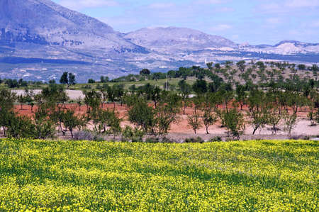 Spring flowers in field with Sierra de las Estancias to the rear, Near Puertecico, Almeria Province, Andalucia, Spain, Western Europe  photo