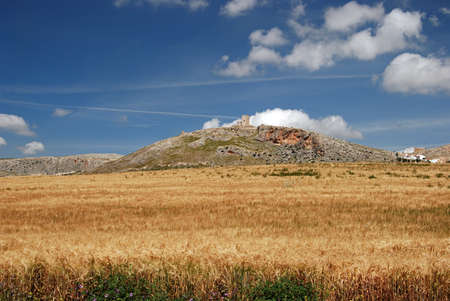 Wheat field with Star castle  Castillo de la Estrella  to the rear, Teba, Malaga Province, Andalucia, Spain, Western Europe  photo