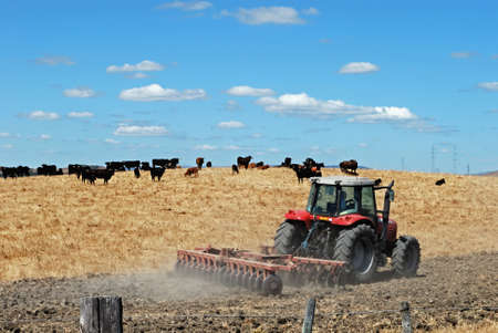 ploughing: Tractor ploughing the field with bulls to the rea