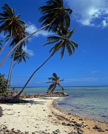 Pigeon Point beach, Tobago, Trinidad   Tobago, Caribbean, West Indies Stock Photo - 20002192