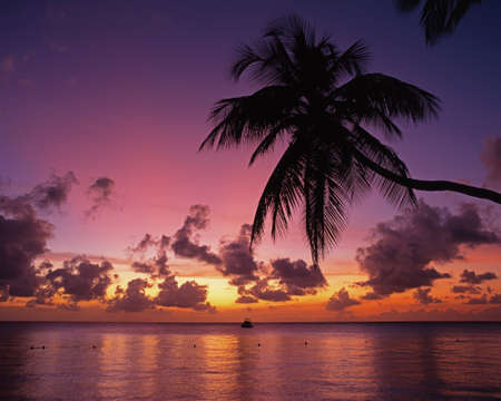 Palm Tree silouetted agains a sunset with a boat in the bay, Pigeon Point, Tobago, Trinidad   Tobago, Caribbean, West Indies photo