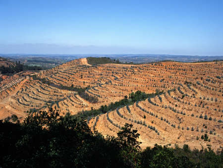 portugal agriculture: Terraced field in the Monchique Mountains, Algarve, Portugal, Western Europe