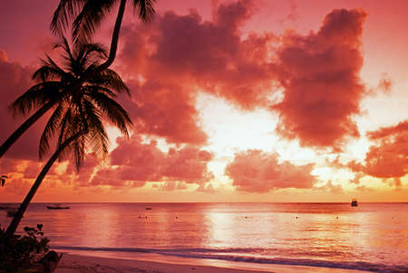 Palm Trees at sunset; Pigeon Point Beach; Tobago; Trinidad and Tobago; Caribbean; West Indies photo