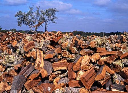 portugal agriculture: Cork Oak bark, Alentejo Region, Portugal, Western Europe  Stock Photo