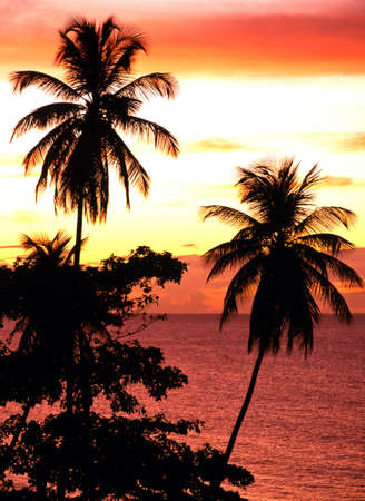Palms silhouetted against a sunset, Grafton Beach, Stonehaven Bay, Tobago, Trinidad and Tobago, Caribbean, West Indies photo
