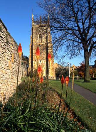 pokers: Red Hot Pokers in the Abbey Grounds, Evesham, Worcestershire, England, UK, Western Europe