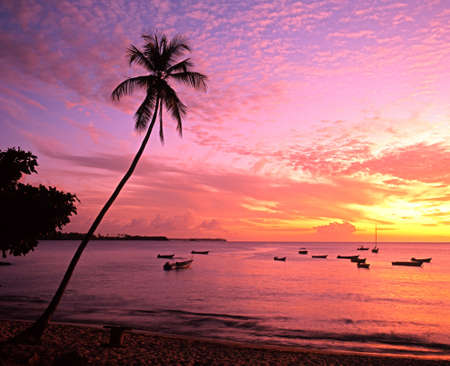 Palm trees and boats silhouetted against a sunset, Mount Irvine Bay, Tobago, Trinidad and Tobago, Caribbean, West Indies  photo