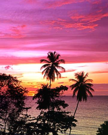 Palm Trees at sunset, Grafton Beach, Stonehaven Bay, Tobago, Trinidad and Tobago, Caribbean, West Indies photo