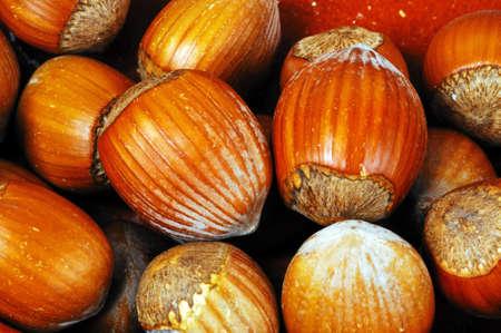 un healthy: Hazelnuts in their shells, UK, Western Europe  Stock Photo