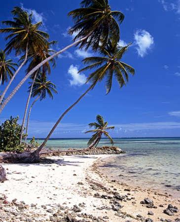 bon: Palm Trees and beach, Bon Accord Lagoon, Tobago, Caribbean, West Indies