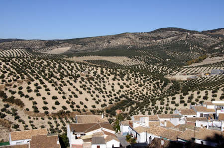 View over rooftops towards the olive groves, Pueblo blanco  whitewashed village , Montefrio, Granada Province, Andalucia, Spain  Stock Photo