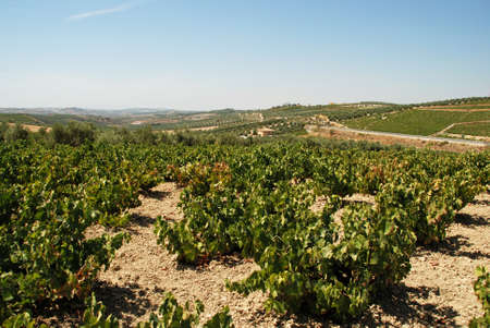 viniculture: View across the vineyards in the Spanish countryside, Montilla, Cordoba Province, Andalusia, Spain, Western Europe.