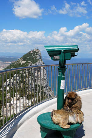 sylvanus: Two Barbary Apes (Macaca Sylvanus) sitting on a telescope on the viewing platform at the top of the rock, Gibraltar, United Kingdom, Western Europe. Stock Photo