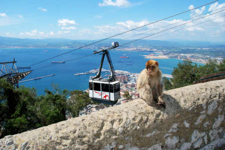 sylvanus: Cable car with views over the town sea and Spanish coastline with a Barbary Ape sitting on the wall in the foreground, Gibraltar, United Kingdom, Western Europe.