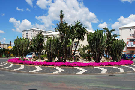 gibraltar: Traffic island with pink flowers and cactus plants, Gibraltar, United Kingdom, Western Europe.