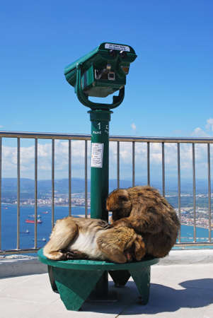 sylvanus: Two Barbary Apes (Macaca Sylvanus) sitting on a telescope on the viewing platform at the top of the rock, Gibraltar, United Kingdom, Western Europe. Editorial