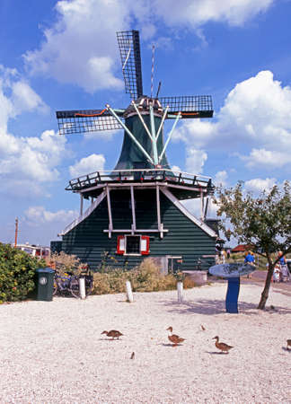 zaan: Windmills along the River Zaan with ducks in the foreground, Zaanse Schans, Holland, Netherlands, Europe. Editorial
