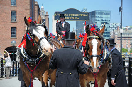 horse show: Shire horses and carriage promoting Liverpool International Horse Show by Kings Dock, Liverpool, Merseyside, England, UK, Western Europe.