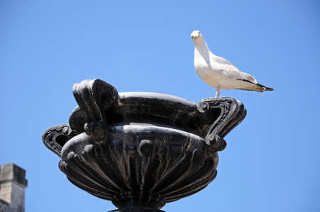 merseyside: Seagull standing on a stone sculpture in Derby Square, Liverpool, Merseyside, England, UK, Western Europe.