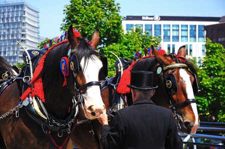 smartly: Shire horses and handlers promoting Liverpool International Horse Show by Kings Dock, Liverpool, Merseyside, England, UK, Western Europe. Editorial