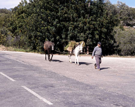 man ass: Portuguese man walking along the road with two donkeys near Alte, Algarve, Portugal, Western Europe. Editorial